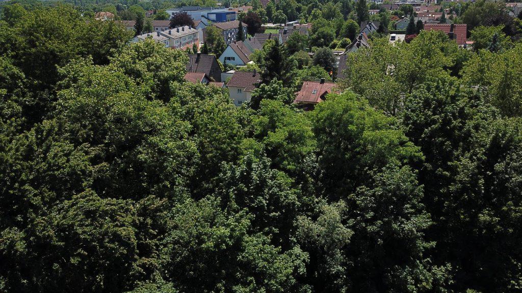 Matulusgarten - Sommer - 11